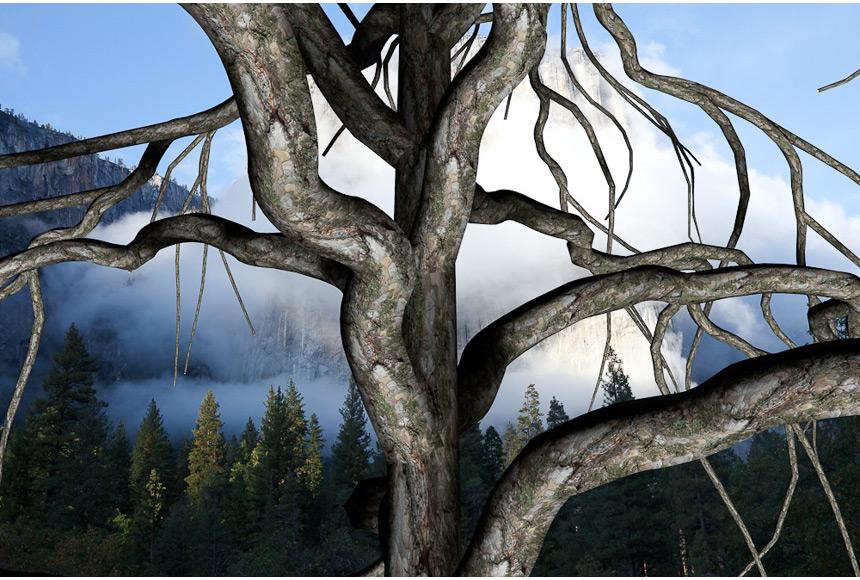061_CDlugos-2011-Roots003-40x55cm