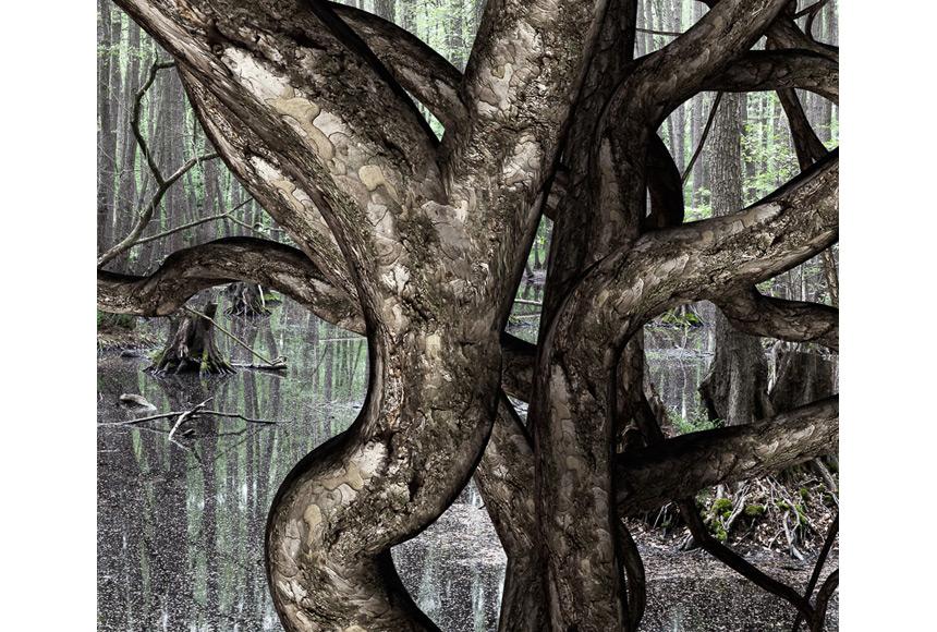 062_CDlugos-2011-Roots004-40x55cm