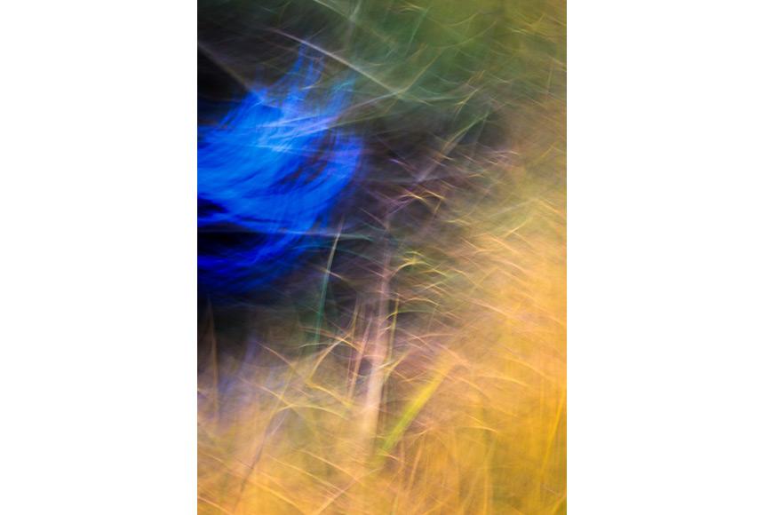 065_CDlugos-2013-Metamorphosen003-84x60cm