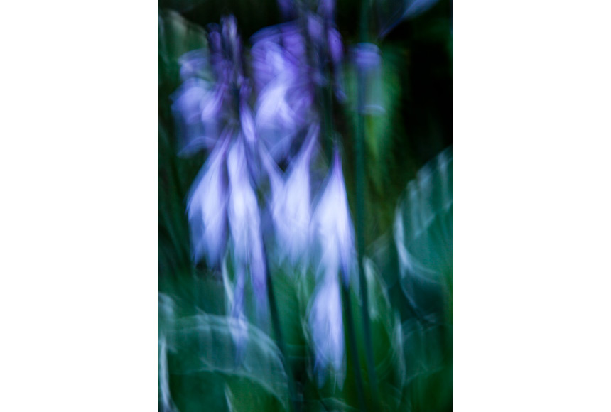 070_CDlugos-2013-Metamorphosen007-84x60cm