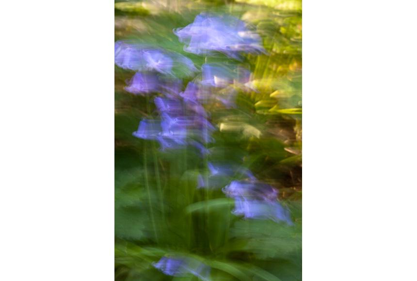082_CDlugos-2013-Metamorphosen019-78x52cm